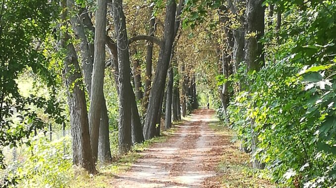 Weg hinter Erfurt